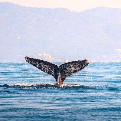 basse-californie-baleine-mexique