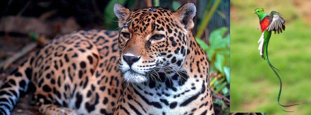 faune du yucatan